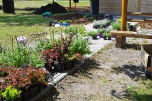 Trwają prace nad utworzeniem mini ogrodu botanicznego roślin miododajnych przy Pasiece Edukacyjnej