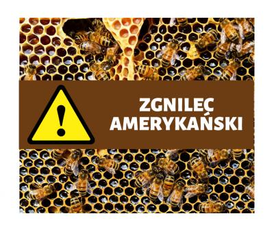 UWAGA! Zgnilec amerykański atakuje pszczoły